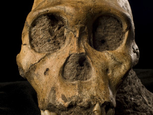 New Fossils Human Kin