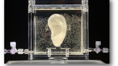 Bioengineers Replicate Van Gogh's Ear
