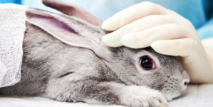 Why Animal Testing  Should End